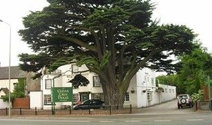 Picture of Cedar Tree Hotel & Restaurant